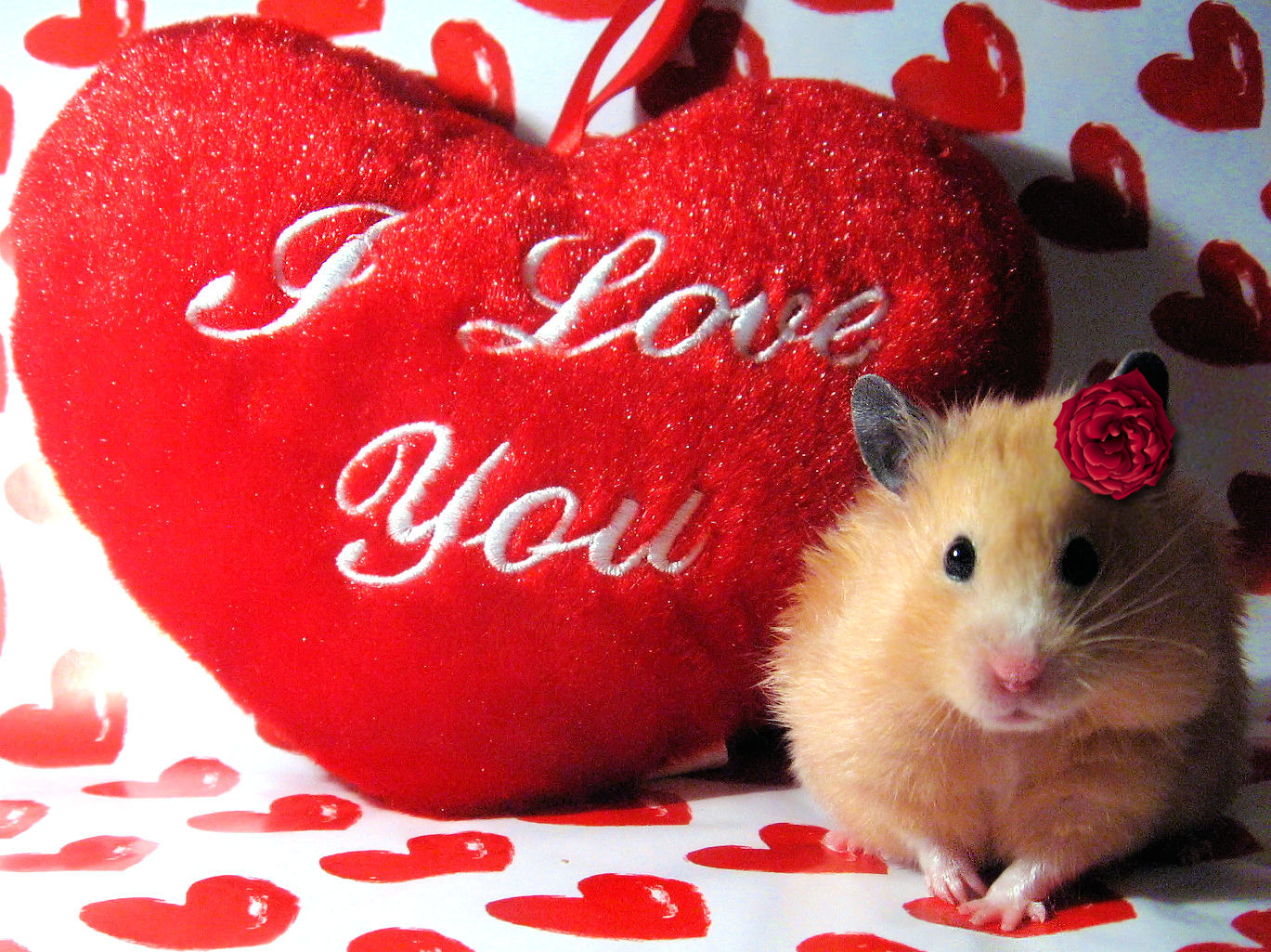 Cute Valentine Animals Animals  dressed up  for the