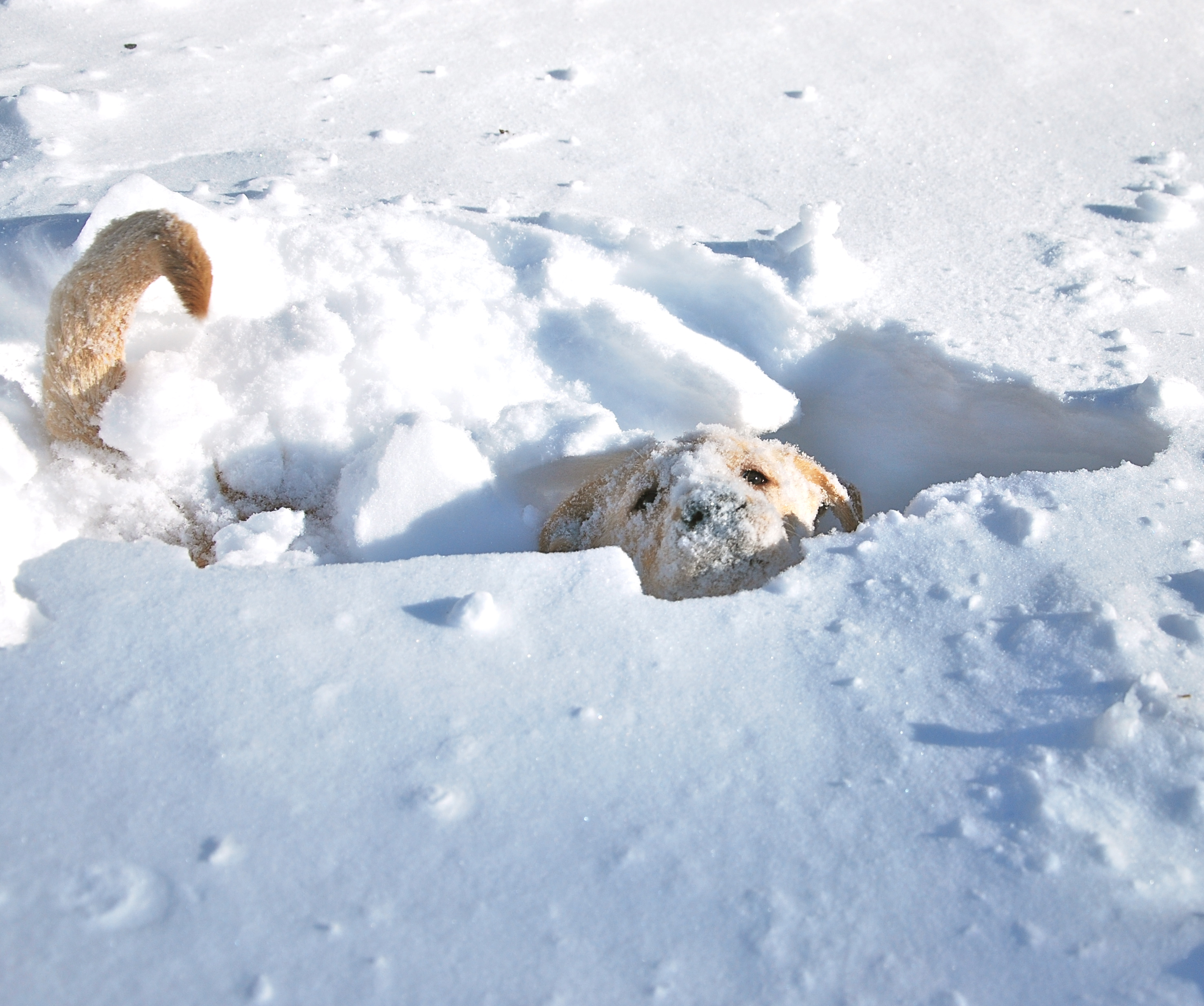 Cute Puppies In Snow Images & Pictures - Becuo