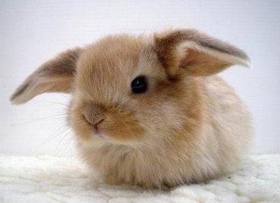 cute_bunny41.jpg