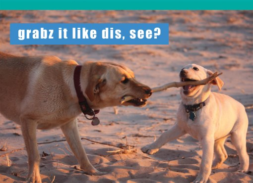 CB170F-i-can-has-cheezburger-madison-park-group-fathers-day-greeting-card-dog-grabz-it-like-dis-see-lab-puppy-humor-lol